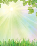 Vector of spring background with grass and leaves. Royalty Free Stock Photo