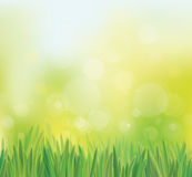 Vector spring background with grass. Stock Photo