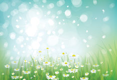 Vector of spring background Royalty Free Stock Image