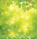 Vector spring  background. Royalty Free Stock Photo