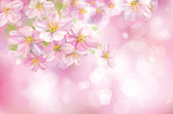 Vector of spring background. Royalty Free Stock Images