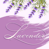 Vector spring background with volumetric lavandula flowers. Lavender flowers on background with elegant handwritten calligraphy. Great for wedding cards royalty free illustration