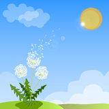 Vector of spring background with white dandelion.  Royalty Free Stock Image