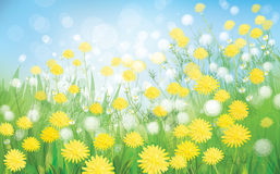 Vector of spring background with white dandelions. Stock Photo