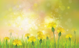 Vector of spring background with yellow dandelions. Spring bokeh nature background with yellow dandelions flowers Stock Photo