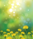Vector of spring background with yellow dandelions Royalty Free Stock Photos