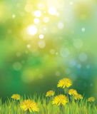 Vector of spring background with yellow dandelions Stock Photography