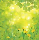 Vector spring background with yellow dandelions. Royalty Free Stock Photography