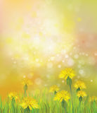 Vector of spring background with yellow dandelions. Royalty Free Stock Photo