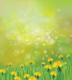 Vector of spring background with yellow dandelions. Stock Photography