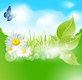 Vector spring banner with  leaves and grass Stock Image