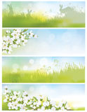 Vector spring banners, blossoming tree branch, nature background Royalty Free Stock Image