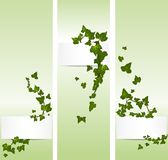 Vector spring banners with ivy. Leaves Royalty Free Stock Images