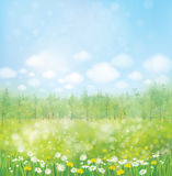 Vector spring blossoming meadow with forest background. Royalty Free Stock Image
