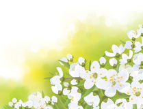 Vector spring blossoming sakura tree. Vector spring blossoming tree on green bokeh background Royalty Free Stock Photography