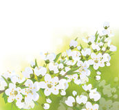 Vector spring blossoming tree  background. Royalty Free Stock Photo