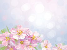 Vector of spring blossoming tree with bokeh backgr Stock Photos