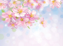 Vector of spring blossoming tree with bokeh backgr Royalty Free Stock Image