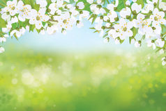 Vector spring blossoming tree on bokeh background. Spring blossoming sakura tree  branches on bokeh, nature background Stock Images