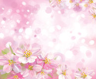 Vector of spring blossoming tree with pink backgro Stock Images