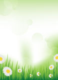 Vector spring design / background Stock Photos