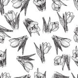 Vector Spring flowers. Floral seamless pattern. Vintage background with Hand Drawn Tulips. Ink pen drawing Stock Photo