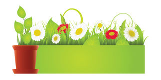 Vector spring green border with grass and flowers Royalty Free Stock Photography