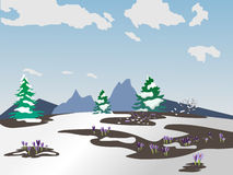 Vector spring landscape. The first snowdrops. Melted snow. Green fir trees in the snow Stock Image