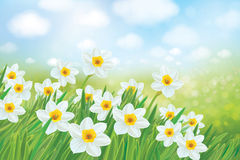 Vector spring nature background. Stock Photos