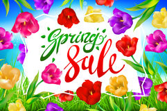 Vector spring sale background, Banner, colotful tulips flowers blue sky with lettering. Template for greeting post card. illustrat Royalty Free Stock Images