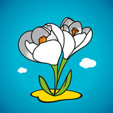 Vector spring snowdrop. The first spring flower on the lawn Stock Photography