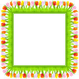 Vector Square frame of spring tulips in grass Stock Photo