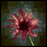 Vector stained glass window with blooming Catananche. vector illustration