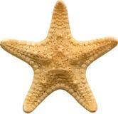 Vector starfish royalty free stock image