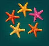 Vector starfish  on dark green background. The vector starfish  on dark green background Royalty Free Stock Photo