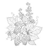 Vector stem with ornate Hops or Humulus. Cones and leaves in black isolated on white. Outline Hops for beer and brewery decor. Royalty Free Stock Photo