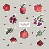 Vector stickers design set . Hand drawn pomegranates. stock illustration