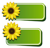 Vector stickers and sunflower Royalty Free Stock Photography