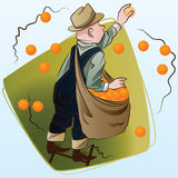 Vector stock illustration. Harvesting. A man collects oranges Royalty Free Stock Photography