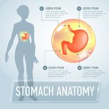 Vector stomach infographics banner illustration Royalty Free Stock Photography