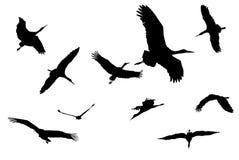 Vector storcks silhouettes Stock Photo