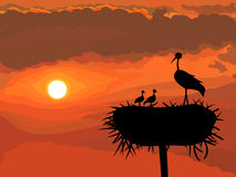 Vector Stork with chicks Stock Images