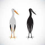 Vector of stork design. Stock Photography