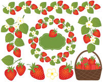 Vector Strawberries Set Included Basket, Wreath, Frame and Flowers. Vector Strawberry. Vector strawberries set included basket, wreath, frame and flowers Vector Royalty Free Stock Photography