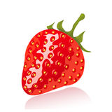 Vector strawberry. Vector illustration of ripe, fresh, juicy strawberry Royalty Free Stock Image