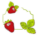 Vector strawberry background. Royalty Free Stock Image