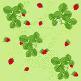 Vector strawberry background Stock Images