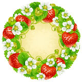 Vector strawberry circle frame. Red berry and white flower Royalty Free Stock Photography