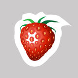 Vector  Strawberry Icon. Vector Strawberry with White Contour Isolated on Grey Background Royalty Free Stock Photography
