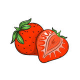 Vector Strawberry illustration on white background Stock Photos